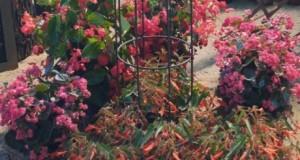 12_07_12_kvety